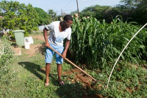 Selwin and his garden